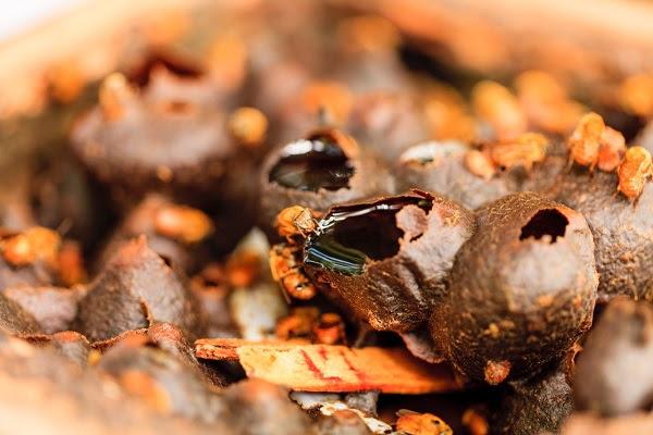 Produtores e chefs criam movimento a favor das abelhas nativas na Bahia
